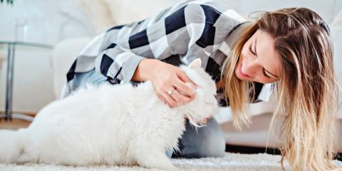 3 Tips to Prepare Your Cat for Pet Boarding, Ewa, Hawaii