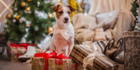How to Prepare Your Dog for Pet Boarding This Holiday Season, Keaau-Mountain View, Hawaii