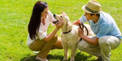 3 Pet Care Tips for Spring, Miami, Ohio
