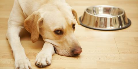 How to Recognize & Treat a Dog's Twisted Stomach, San Marcos, Texas