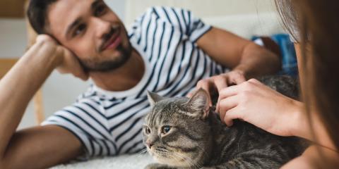 Why Do Cats Bite When You Pet Them?, Columbus, Nebraska