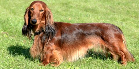 3 Grooming Tips for Long-Haired Pets, Dothan, Alabama