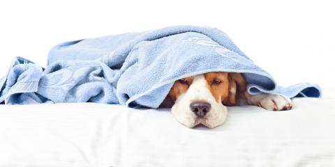 Pet Care: 3 Signs Your Pet Has Allergies, Enterprise, Alabama