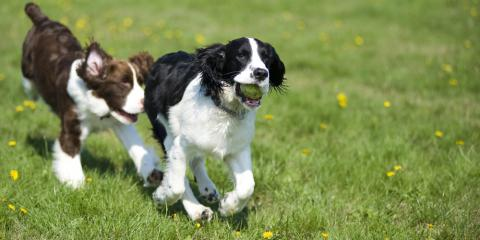 Why Daily Exercise & Play Time Is Crucial for Your Dog, Newtown, Connecticut