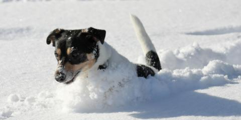 5 Signs It's Too Cold Outside for Your Dog, Fairfield, Ohio