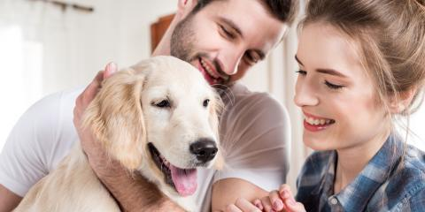 5 Pet Care Strategies for Flying With Your Dog, Clermont, Georgia