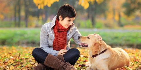 Local Veterinarian Shares 3 Fall Pet Care Tips, High Point, North Carolina