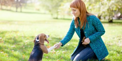 Dog Training Professionals Share 7 Basic Commands for Beginners, Royse City, Texas