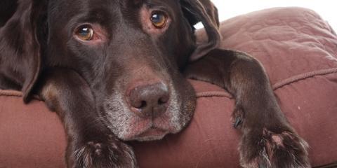 Pet Care: How to Recognize & Treat Pet Anxiety, Bainbridge Island, Washington