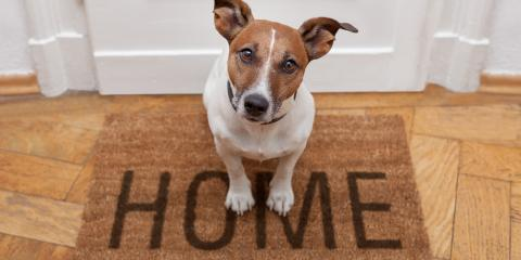 3 Tips for Preparing to Bring Home a New Dog, Mount Washington, Kentucky
