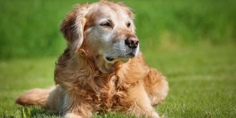 Common Questions About Senior Pet Care, ,