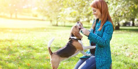 3 Useful Tips for Socializing Your Adult Dog, ,