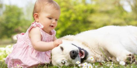 Tips to Prepare Your Dog for a Newborn, ,