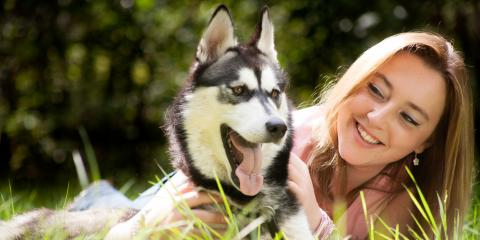 3 Tips to Protect Your Pet's Teeth, ,