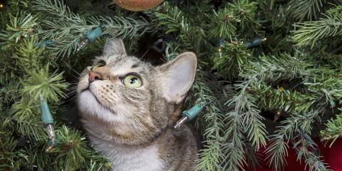 How to Cat-Proof Your Christmas Tree This Season, Lincoln, Nebraska