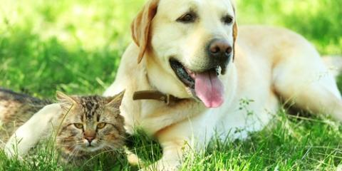 How Often Should You Apply Flea Medicine to Your Pet?, Live Oak, Florida