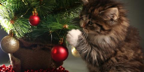 5 Tips to Keep Your Pets Safe During the Holidays, Miami, Ohio
