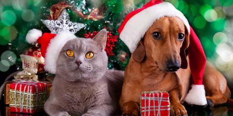 Safe Ways to Treat Your Pet This Holiday Season, Milford, Ohio