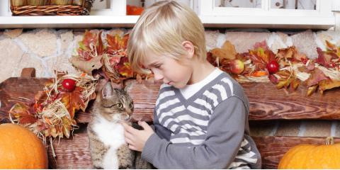 3 Pet Care Tips for Keeping Your Furry Friends Safe on Thanksgiving, Ewa, Hawaii