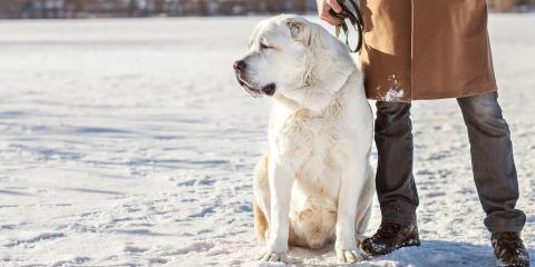 Does Your Dog Need Protection From the Winter Cold?, Mount Washington, Kentucky