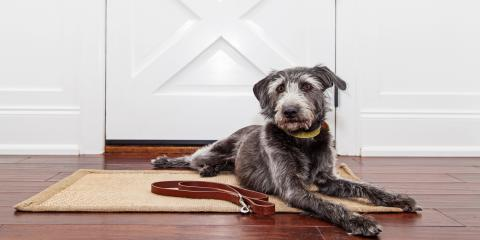 5 Pet Care Tips for Housetraining Adult Dogs, Orange Beach, Alabama