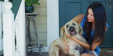 3 Pet Care Tips to Help Your Dog Lose Weight, Orange Beach, Alabama