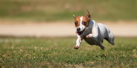 5 Effective Ways to Manage Your Dog's Weight , Rhinelander, Wisconsin