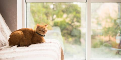 5 Cat Care Tips for Apartment Dwellers , Rice Lake, Wisconsin