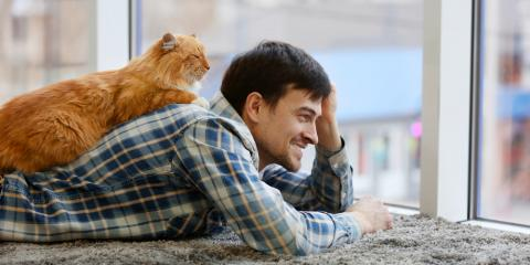 5 Pet Care Tips for Senior Cats, Robertsdale, Alabama
