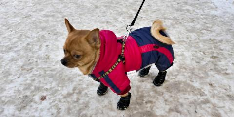 4 Pet Care Tips to Protect Your Dog This Winter, Russellville, Arkansas