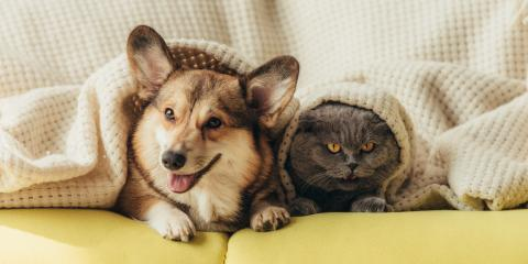 3 Tips for Introducing a Dog to a Cat, Baraboo, Wisconsin