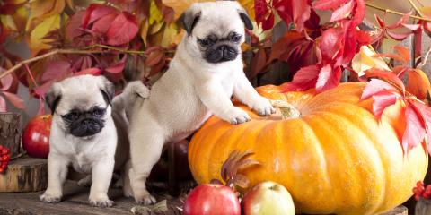 3 Tips for Keeping Your Pets Healthy This Fall, Versailles, Kentucky