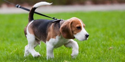 5 Easy Ways to Upgrade Your Dog Walking Routine, Elyria, Ohio