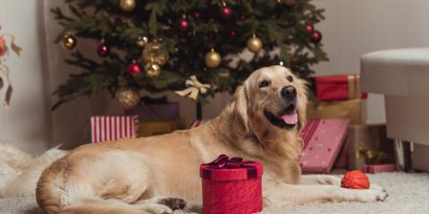 Local Vet Shares Holiday Gift Ideas for Dogs & Cats, Ewa, Hawaii