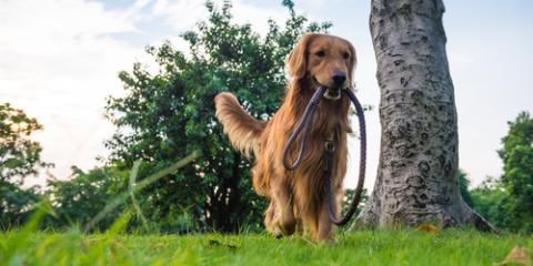 A Guide to Seasonal Allergies in Dogs, San Marcos, Texas