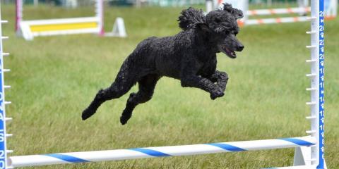 3 of the Smartest Dog Breeds, Mount Washington, Kentucky