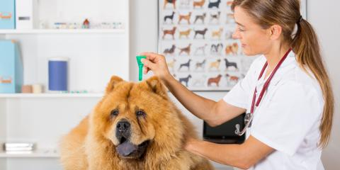 Pet Care Professionals Answer FAQ About Flea Treatment , Perry, Georgia