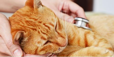 3 Qualities to Look for in a Pet Clinic, Bainbridge Island, Washington