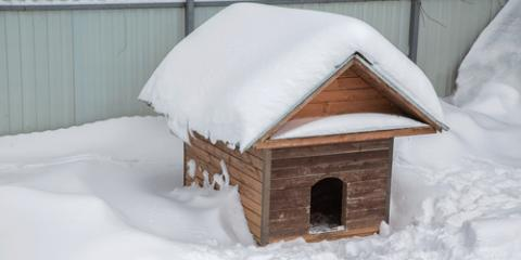 Pet Clinic Shares Outdoor Safety Tips to Protect Dogs in the Cold , Green, Ohio