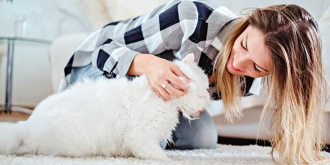 3 Common Pet Dental Care Issues, Covington, Kentucky