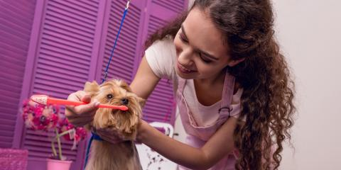 3 Pet Dental Care Tips for Your Dog, Honolulu, Hawaii