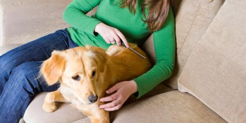 5 Common Pet Dermatology Problems That Affect Dogs, Sharonville, Ohio