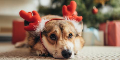 3 Pet Safety Tips for the Holiday Season, Elk Grove, California