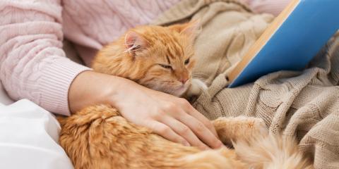 A Brief Guide on Cat Aggression When Petting, Columbia, Missouri