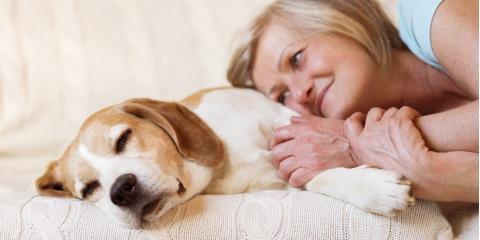 3 Tips for Determining Your Pet's Quality of Life, Atlanta, Georgia