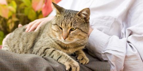 4 Tips to Grieve the Loss of a Pet, Atlanta, Georgia