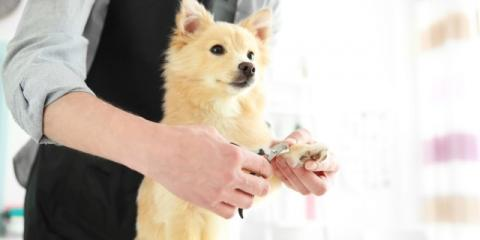 Dog Grooming: 3 Tips to Help Your Pup Relax During Nail Clipping, Manhattan, New York