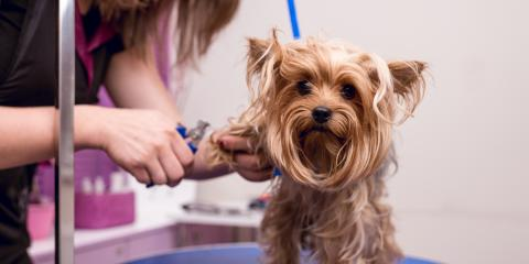 3 Ways Grooming Can Improve Your Dog's Health, Manhattan, New York