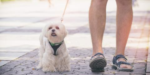 How to Choose Between a Dog Collar & Harness, Manhattan, New York