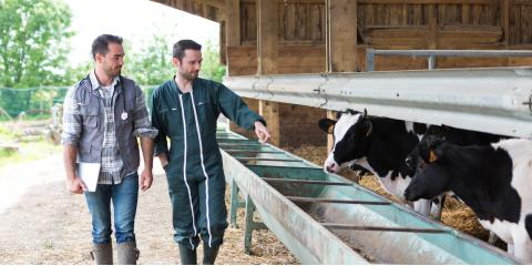 3 Tips for Keeping Your Barn Animals Cool During the Summer, Foristell, Missouri